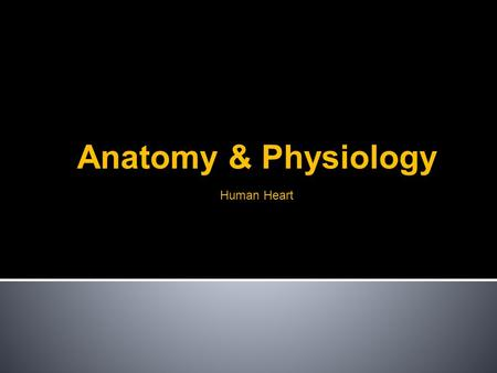 Human Heart Anatomy & Physiology. Basics Where is your heart? What does your heart do? Pumps Blood.