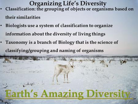 Organizing Life's Diversity Classification: the grouping of objects or organisms based on their similarities Biologists use a system of classification.