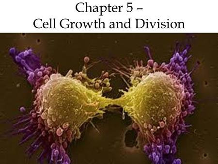 Chapter 5 – Cell Growth and Division. The cell cycle is the regular pattern of growth for cells and has 4 main phases 3.Gap 2 (G 2 ) More growth Another.