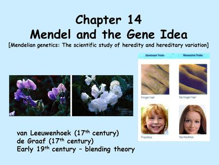 Chapter 14 Mendel and the Gene Idea [ Mendelian genetics: The scientific study of heredity and hereditary variation] van Leeuwenhoek (17 th century) de.