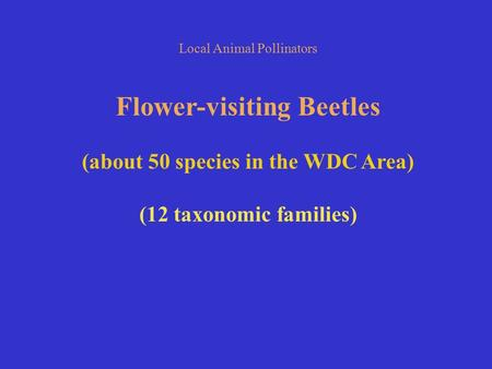 Local Animal Pollinators Flower-visiting Beetles (about 50 species in the WDC Area) (12 taxonomic families)