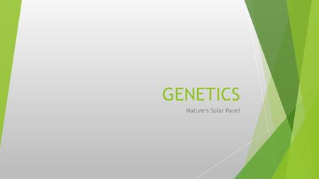 GENETICS Nature's Solar Panel. ASEXUAL REPRODUCTION  Reproduction without sex  Genetically identical  Cloning  Propagating.