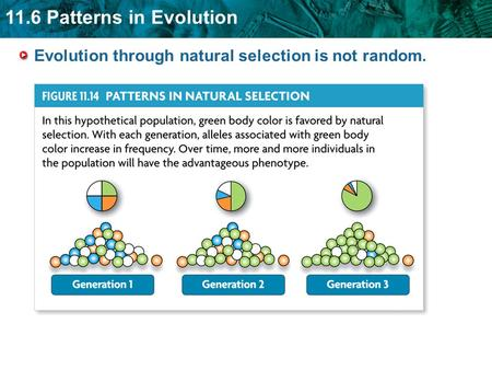 11.6 Patterns in Evolution Evolution through natural selection is not random.