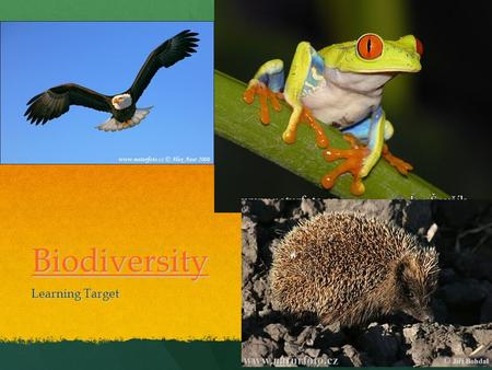 Biodiversity Learning Target. BIODIVERSITY What is biodiversity? What is biodiversity? The variety of life on earth The variety of life on earth Focus.