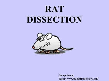 RAT DISSECTION Image from:
