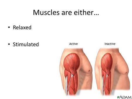 "Muscles are either… Relaxed Stimulated. Contractions Muscle contractions are ""all or none"" There are different types of contractions…"