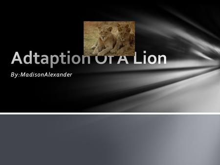 By:MadisonAlexander. What They Eat The lions temp get up to 101 deg F A male lion length get up to 9ft (2.4) meters A female lions length get up to 8.