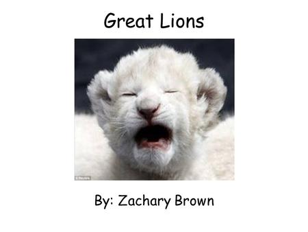 Great Lions By: Zachary Brown. Table of Contents Introduction…………….....3 Living……………………………..4 Growing………………..……....5 Look like………………………..6 Eating…………………………....7.