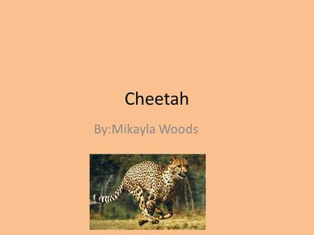 Cheetah By:Mikayla Woods. Classification and Description Acinonyx Jubatus Feline Adult size 80-140 pounds Golden or yellowish fur/ black spots.