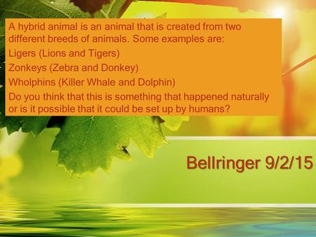 Bellringer 9/2/15 A hybrid animal is an animal that is created from two different breeds of animals. Some examples are: Ligers (Lions and Tigers) Zonkeys.