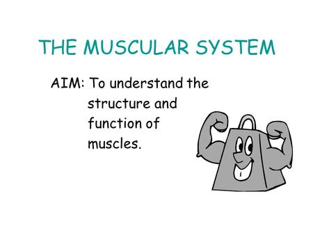 THE MUSCULAR SYSTEM AIM: To understand the structure and function of muscles.