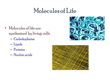 Molecules of Life Molecules of life are synthesized by living cells – Carbohydrates – Lipids – Proteins – Nucleic acids.