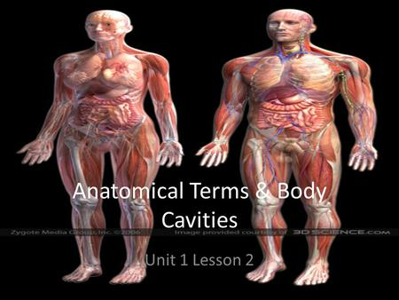 Anatomical Terms & Body Cavities Unit 1 Lesson 2.