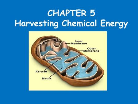 CHAPTER 5 Harvesting Chemical Energy. Chemical Energy and Food All organisms require energy to carry out their life functions. Evolution has produced.