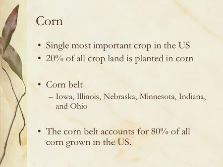 Corn Single most important crop in the US 20% of all crop land is planted in corn Corn belt –Iowa, Illinois, Nebraska, Minnesota, Indiana, and Ohio The.