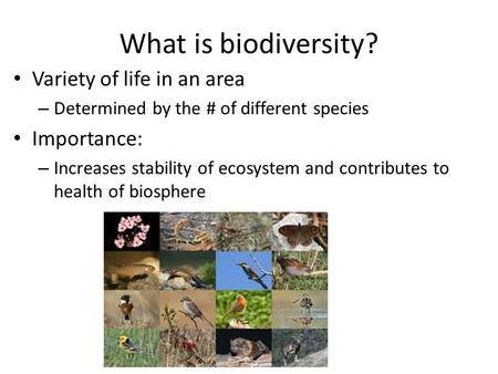 What is biodiversity? Variety of life in an area – Determined by the # of different species Importance: – Increases stability of ecosystem and contributes.