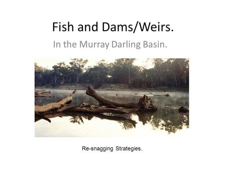 Fish and Dams/Weirs. In the Murray Darling Basin. Re-snagging Strategies.