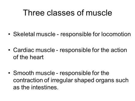 Three classes of muscle Skeletal muscle - responsible for locomotion Cardiac muscle - responsible for the action of the heart Smooth muscle - responsible.