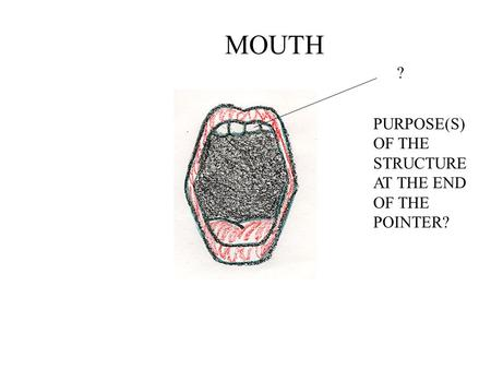 MOUTH ? PURPOSE(S) OF THE STRUCTURE AT THE END OF THE POINTER?