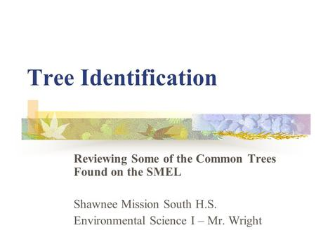 Tree Identification Reviewing Some of the Common Trees Found on the SMEL Shawnee Mission South H.S. Environmental Science I – Mr. Wright.