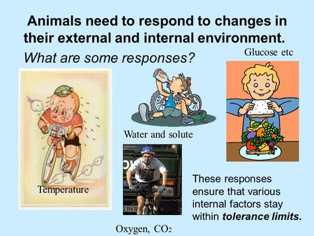 Animals need to respond to changes in their external and internal environment. What are some responses? These responses ensure that various internal factors.