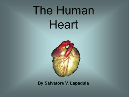 The Human Heart By Salvatore V. Lapadula Facts about the Human Heart Is a muscle Moves 2,000 gallons of blood each day Beats between 60 to 100 times.