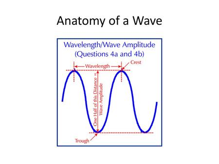 Anatomy of a Wave. Waves- Main Causes Waves do not move across the water, they rise and fall in one place (a circular motion) Wind blows across surface.