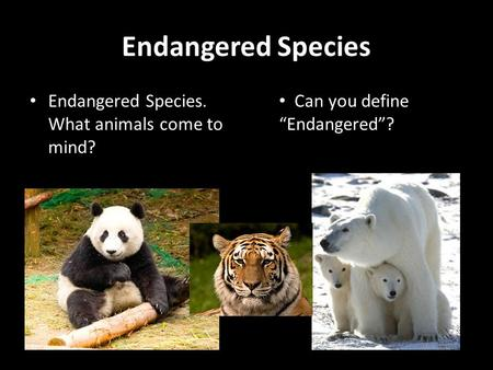 "Endangered Species Endangered Species. What animals come to mind? Can you define ""Endangered""?"
