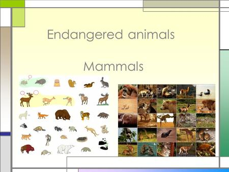 Endangered animals Mammals. □Mammals are animals who have hair or fur. □Mammals mothers nurse their young with milk. □Mammals live on land. □They have.