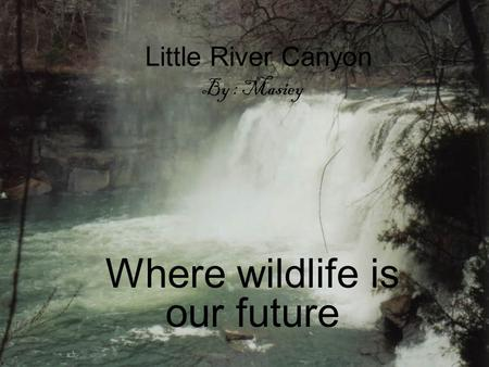 Little River Canyon By : Masiey Where wildlife is our future.