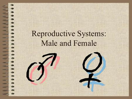 Reproductive Systems: Male and Female. Male Testicle: Produces sperm and testosterone (puberty) Penis: Allows for exit of urine and semen Scrotum: Holds.