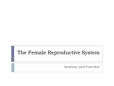 The Female Reproductive System Anatomy and Function.