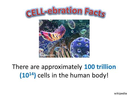 There are approximately 100 trillion (10 14 ) cells in the human body! jaascar.com wikipedia.