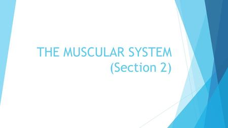 THE MUSCULAR SYSTEM (Section 2). WARM-UP  Complete the BONES QUIZ  BONUS QUESTION! (WORTH ONE POINT) NAME ONE TYPE OF MOVABLE JOINT.