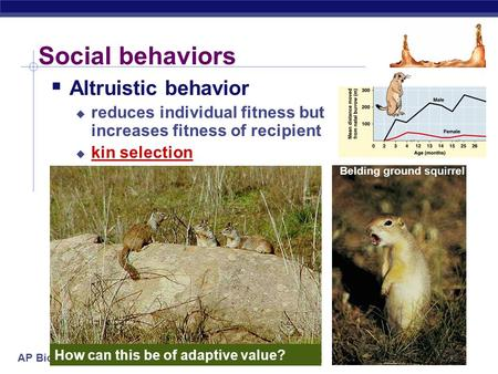 AP Biology 2005-2006 Social behaviors  Altruistic behavior  reduces individual fitness but increases fitness of recipient  kin selection How can this.