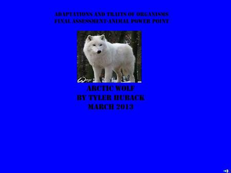 Adaptations and traits of organisms final assessment-animal power point Arctic wolf by tyler huback march 2013.
