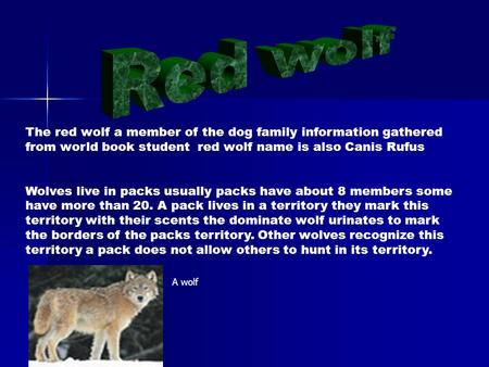 The red wolf a member of the dog family information gathered from world book student red wolf name is also Canis Rufus Wolves live in packs usually packs.