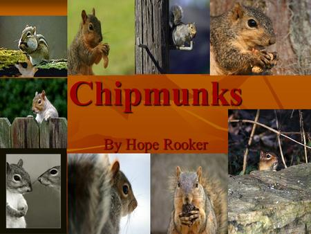 Chipmunks By Hope Rooker. What Eastern Chipmunks Eat Eastern Chipmunks eat grasshoppers. Eastern Chipmunks eat grasshoppers. They also eat nuts. They.