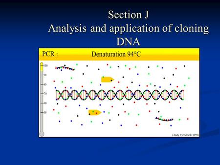 Section J Analysis and application of cloning DNA.