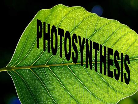 Autotroph Autotroph (Producers) Make their own food Photosynthesis Chemosynthesis - Plants - Some bacteria & protistsHeterotroph (Consumers) Energy obtained.