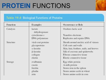PROTEIN FUNCTIONS. PROTEIN FUNCTIONS (continued)