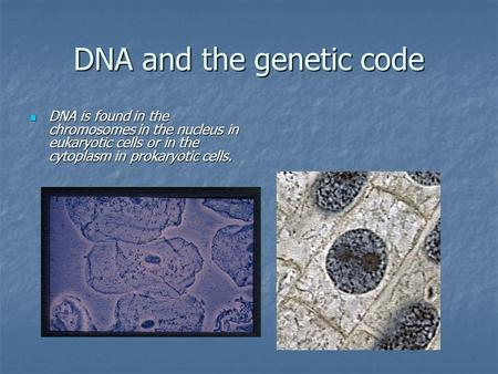 DNA and the genetic code DNA is found in the chromosomes in the nucleus in eukaryotic cells or in the cytoplasm in prokaryotic cells. DNA is found in the.