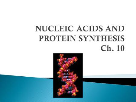 NUCLEIC ACIDS AND PROTEIN SYNTHESIS Ch. 10