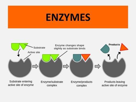 ENZYMES. There are thousands of reactions that occur within organisms. These reactions would occur very slowly or not at all without enzymes.