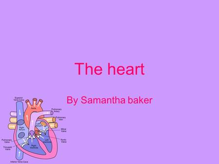 The heart By Samantha baker. Healthy heart Keeping your heart healthy is easy as cake … Examples 1. exercise regularly 2.Eat more fruit and vegetable.