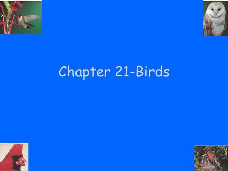 Chapter 21-Birds. Class Aves Birds members of class Aves Major characteristics of this group: –Adaptations for flight: Wings Feathers Endothermy High.