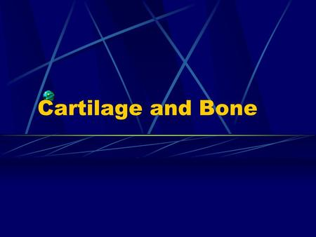 Cartilage and Bone. 1. Cartilage: organ=Cartilage tissue+perichondrium.