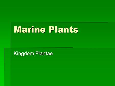 Marine Plants Kingdom Plantae. Multicellular Algae  Structure  Lack leaves, stems and roots  Body is called Thallus  Blade is the flat leaf like structure.