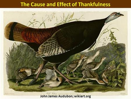 The Cause and Effect of Thankfulness John James Audubon; wikiart.org.