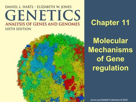 Chapter 11 Molecular Mechanisms of Gene regulation Jones and Bartlett Publishers © 2005.